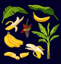 collection of ripe yellow bananas green leaves vector image