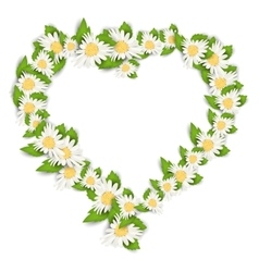Daisy Flowers in Form Heart Isolated on White vector