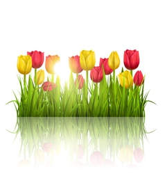 Green grass lawn with tulips sunlight and vector image