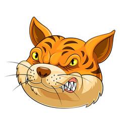Mascot head an cat vector