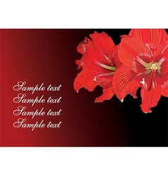 Red Lily Design with Text Space vector