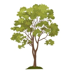 Maple tree and green grass vector image vector image