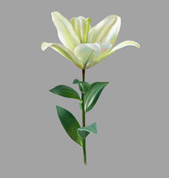 Digital drawing of white lily flower realistic vector