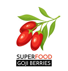 goji berries icon vector image