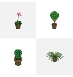 Isometric houseplant set of tree grower peyote vector