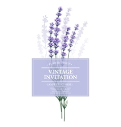 Vintage card with lavender flower vector
