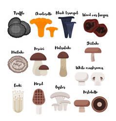 flat style set of mushrooms vector image vector image