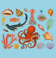 Fishes set or sea creature nautilus pompilius vector