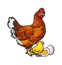 Hand drawn brown hen little chicken and peeled vector
