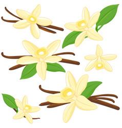 Vanilla flowers and sticks vector