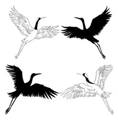 wild birds in flight animals in nature or in the vector image