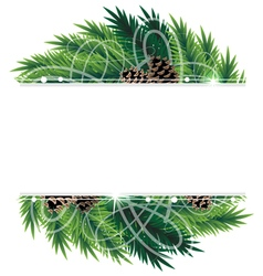 Christmas tree branches and cones vector image