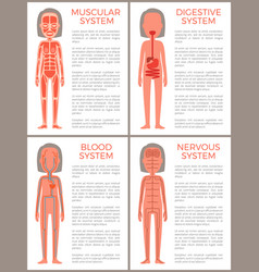 blood muscular digestive and nervous systems set vector image