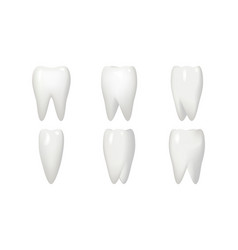 isolated on white rotation tooth root animation vector image