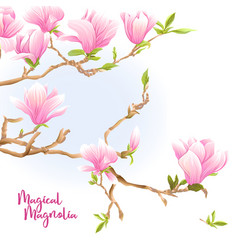 Magnolia tree branch with flowers vector