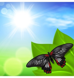 Sunny background with green grass and butterfly vector image