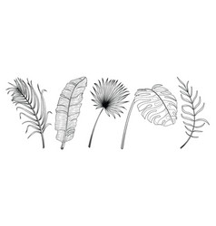 tropical leaf hand drawn set vector image