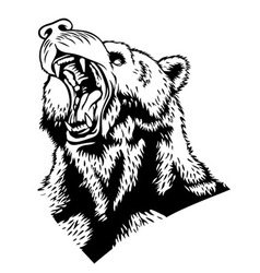 Head of the bear vector image vector image