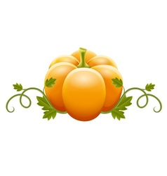 pumpkin vegetable with green vector image