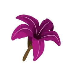 Purple Chinese rose with trumpet shaped petals vector