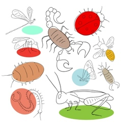 Insect collection vector image vector image