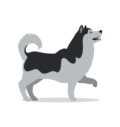 Huskies in Stand on White Background vector image
