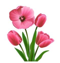 Tulip flower pink vector image vector image