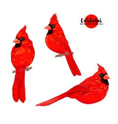 Cardinal birds vector