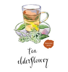 Elderflower sambucus nigra tea in glass mug vector