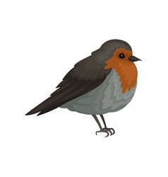 Flat icon of european robin small songbird vector