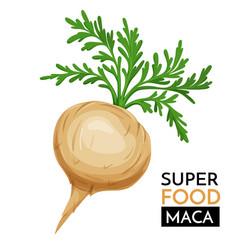maca icon vector image