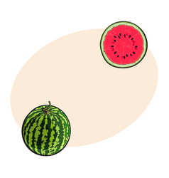 Whole striped watermelon and cut in half sketch vector