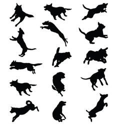 dogs jumping vector image