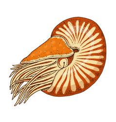 Sea creature nautilus pompilius shellfish or vector
