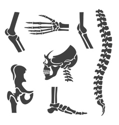 Human joints set Orthopedic and spine vector image vector image