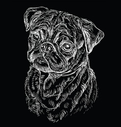 Black pug hand drawing portrait vector