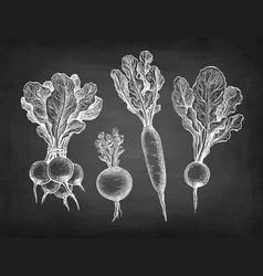 chalk sketch radish vector image