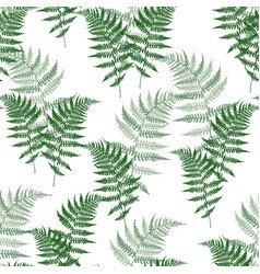 fern frond herbs tropical forest plant leaves vector image