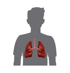 Human silhouette with inflamed respiratory system vector