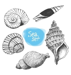 Sea collection of shells Original hand drawn vector