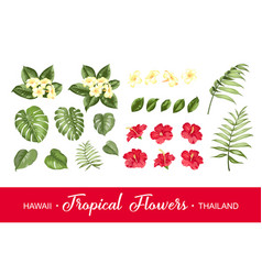 set tropical flowers elements collection of vector image