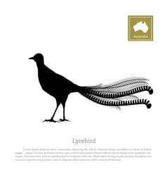 black silhouette of lyrebird animals of australia vector image vector image