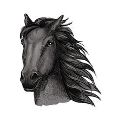 Black proud running horse portrait vector image