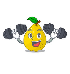 fitness character ripe quince fruit with leaf vector image