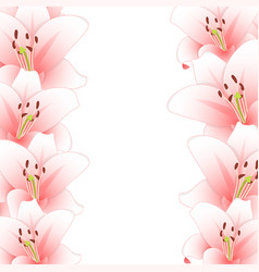 pink lily flower border isolated on white vector image