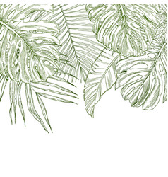 Top border composed tropical leaves vector