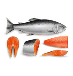 salmon red fish realistic isolated vector image