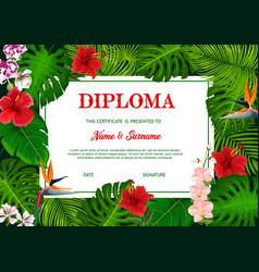 school diploma with tropical palm leaves vector image
