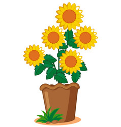 sunflower plant in the pot vector image