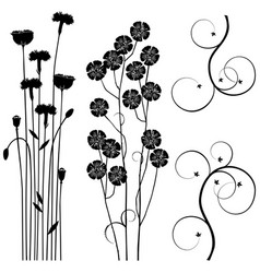 collection for designers meadow plants set vector image